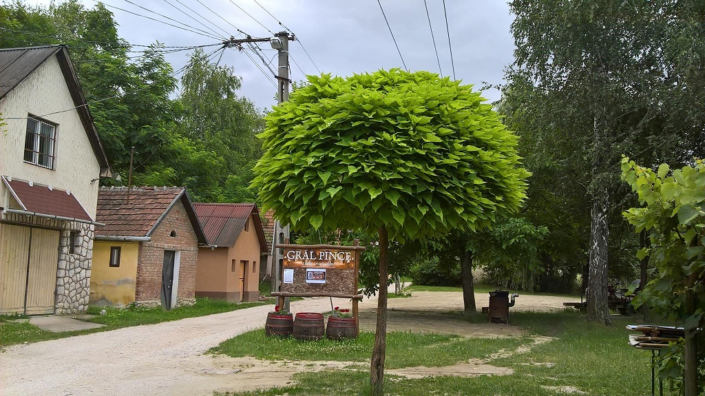 Grál Pince (előtti udvar, parkoló)